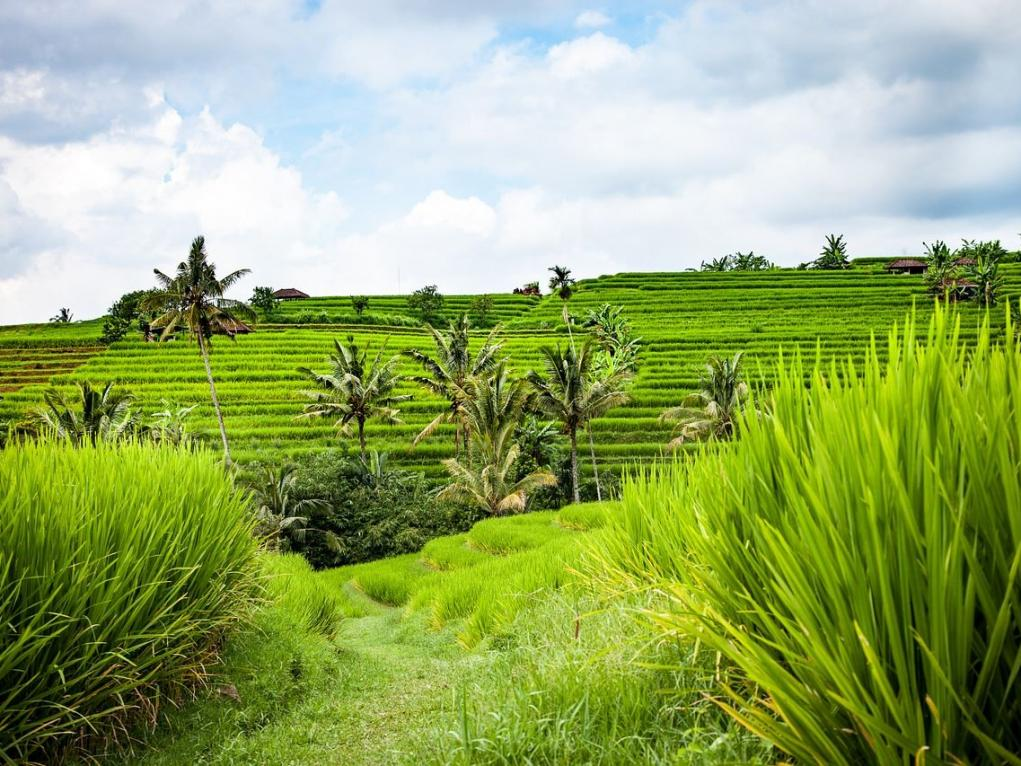 Other hotels Bali (These rates are also valid for Family & Friends)